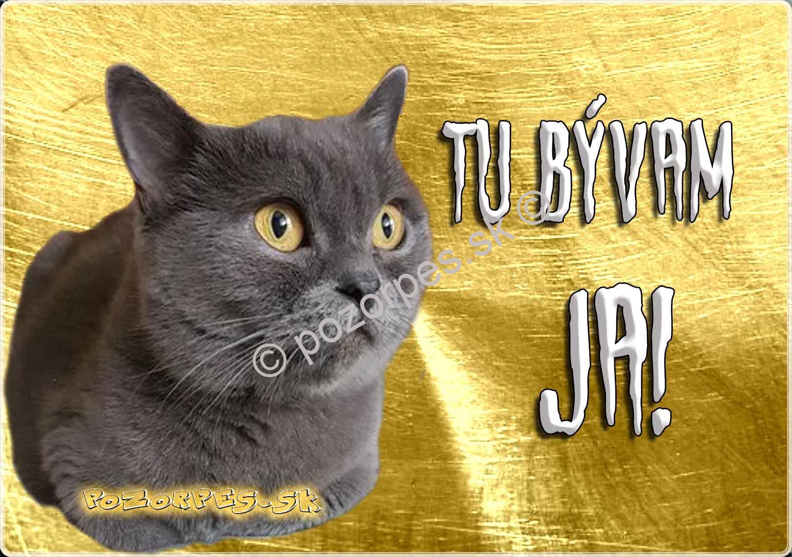 pekná mačička fotogalérie